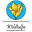 Wildtulpe - Mösthinsdorfer Heimatverein e.V.