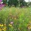 Art´n Vielfalt - in Mayrhof blüht den Bienen und Insekten was